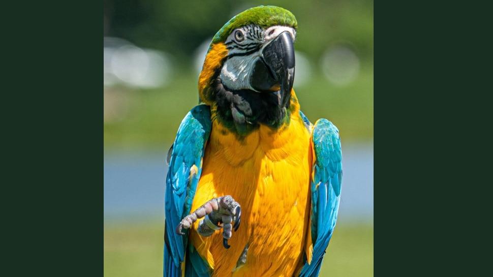 मालकिन की रेप के बाद हत्या पर Parrot ने कहा कुछ ऐसा, बन गया मुख्य गवाह; अब दोषियों को मिलेगी सजा!