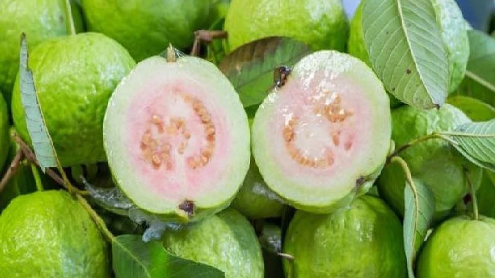 Benefits of guava fruit:ठंड के मौसम में इस वक्त खा लें 1 अमरूद, शरीर बन जाएगा ताकतवर, मिलेंगे यह गजब के फायदे