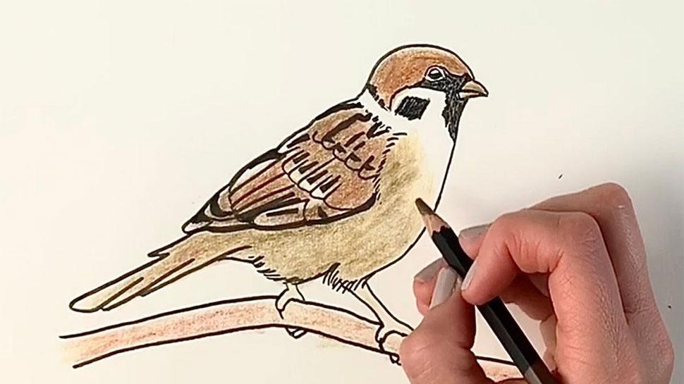 World_Sparrow_Day