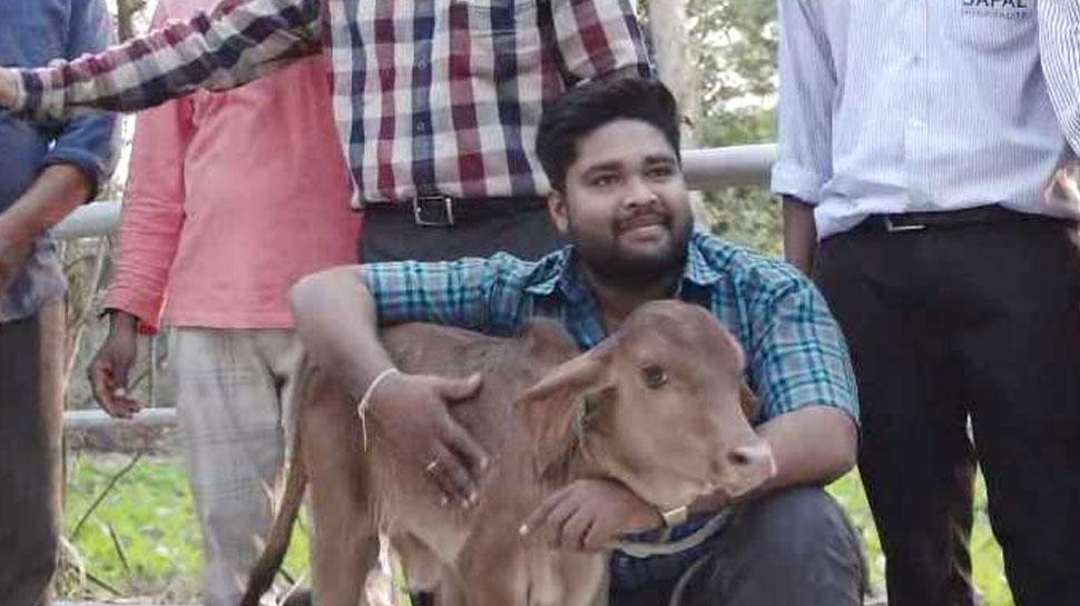 In Gujarat, Breeds of higher milk cows being prepared with IVF method