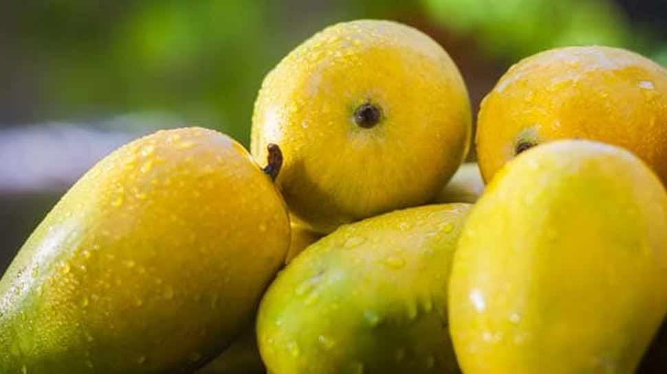 नूरजहां आम, noor jahan mango, noor jahan mango price, jahan mango