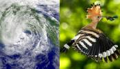 हुदहुद : एक पक्षी के नाम से इतनी दहशत