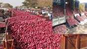 मुंबई: 2 दिनों में प्याज की कीमतों में आई गिरावट, व्यापारियों ने बताया कब घटेंगे दाम