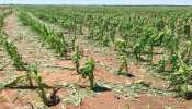 बिहार: लॉकडाउन में फसल की कटाई पर भी संकट