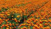 राजस्थान: लॉकडाउन के कारण फूल व्यापार को भारी नुकसान, व्यापारी बोले...