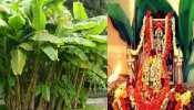 Kele ke ped ki puja: गुरुवार को जरूर करें केले के पेड़ की पूजा, परिवार में आएंगी ढेर सारी खुशियां