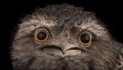 Instagram पर इस पक्षी ने मचाया धमाल, Likes का बनाया रिकॉर्ड