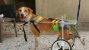 रतन टाटा ने बेजुबान दिव्यांग कुत्ते को दिलाया घर, वीडियो शेयर कर लिखी दिल छू लेने वाली बात