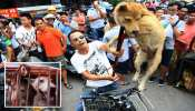 China में क्रूर Dog Meat Festival शुरू, स्वाद के नाम पर 5000 से अधिक बेजुबानों को उतारा जाएगा मौत के घाट