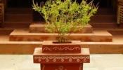 Importance Of Tulsi: प्रेत बाधा से लेकर वास्तु दोष तक, घर में अगर है तुलसी तो दूर रहेंगे सारे कष्ट