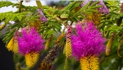 Shami Tree: सावन के शनिवार को करें शमी की पूजा, फिर देखिए कैसे बदल जाता है भाग्य