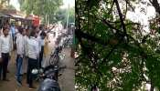रामपुर: दो लाख रुपयों से भरा बैग छीनकर भागे बंदर, पेड़ से बरसाए 500-500 के नोट