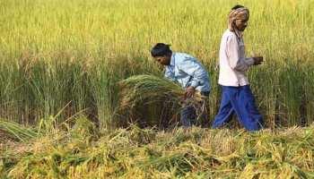 राजस्थान: खेती के लिए सरकार लागू करेगी नई योजना, किसानों को मिलेगी राहत