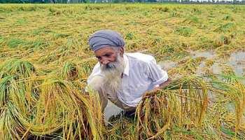 राजस्थान: मौसम में बदलाव से बढ़ी किसानों की मुश्किलें, मंडियों में भीगा अनाज