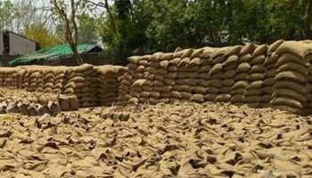 श्रीगंगानगर: FCI को बेची गेंहू, हुई बारिश, नुकसान की भरपाई करेंगे किसान