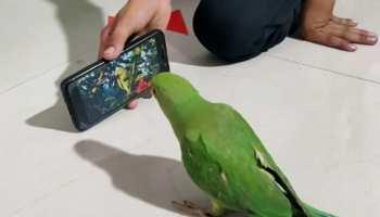 मोबाइल के लिए तोते की ऐसी दीवानगी देखकर आप रह जाएंगे हैरान, खाना खाने के लिए भी चाहिए फोन