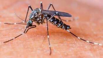 छत्तीसगढ़ः भिलाई में फिर मंडरा रहा है डेंगू का खतरा, 4 केस मिलने के बाद मचा हड़कंप