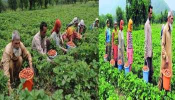 जम्मू-कश्मीर के किसान होंगे मालामाल, मोदी सरकार ने बनाया ये प्लान
