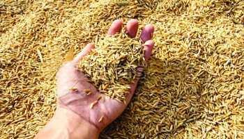 पटना: सरकार की किसानों को सौगात, पैड़ी प्रोक्योरमेंट के जरिए होगी धान की खरीदारी