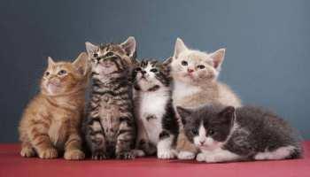 देश में पहली बार इस शहर में होगी बिल्लियों की नसबंदी, वजह जानकर आप हो जाएंगे हैरान