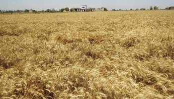 राजस्थान: Lockdown ने बढ़ाई चिंता, किसानों को सताने लगा यह डर...