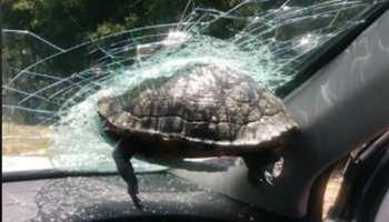 'ये उड़ कैसे सकता है', कांच तोड़कर कार में घुसा कछुआ तो बोल पड़े लोग, देखें Viral Video