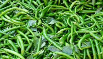हरी मिर्च खाने के ये फायदे चौंका देंगे आपको, कैंसर से लेकर आथ्रॉईटिस में है फायदेमंद