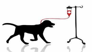 यहां कुत्ते और बिल्ली करते हैं Blood Donate, हर साल बचाई जाती हैं कई जिंदगियां