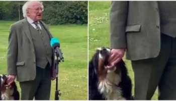 Ireland President Viral Video: टीवी पर Live Show के दौरान राष्ट्रपति के कुत्ते ने की गजब हरकत, देखिए वीडियो
