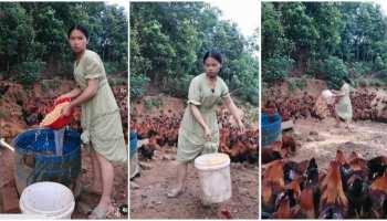 Viral Video: लड़की ने घूम-घूमकर डाला मुर्गियों को दाना, लोगों ने वीडियो पर दिया ऐसा रिएक्शन
