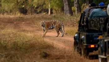 फिर खुलेंगे MP के 6 नेशनल पार्कः ऑनलाइन बुकिंग शुरू, इन दो टाइगर रिजर्व में जाने को उत्साहित पर्यटक