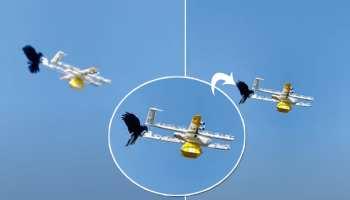 ड्रोन को हवा में उड़ते देख कौवे ने किया अटैक, चोंच मारा और फिर जो हुआ उसे जरूर देखना चाहिए आपको