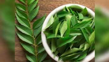 Benefits of Curry Leaves: सेहत के लिए संजीवनी की तरह काम करता है करी पत्ता, जानें 5 बड़े फायदे