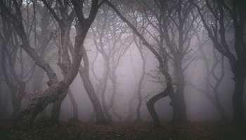 ये है दुनिया का सबसे डरावना और रहस्यमयी जंगल, जहां अंदर जाने के बाद नहीं लौट पाया कोई