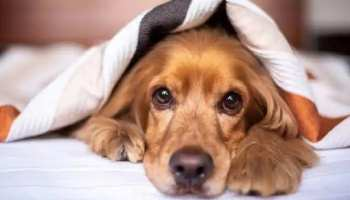 Knowledge Story Dogs are not good only in smelling but they dreaming also known interesting facts about do