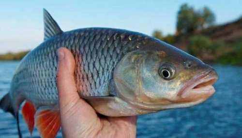 बीजेपी मंत्री के तालाब से चोरी हुईं 30 हजार मछलियां, जांच में जुटी पुलिस