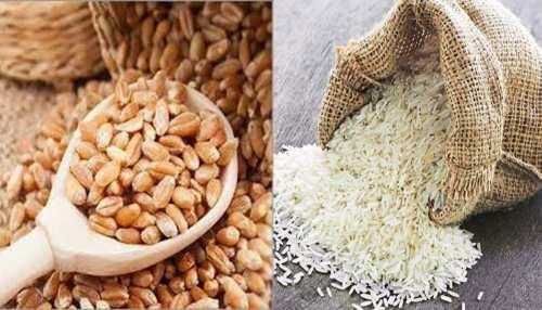 MP के किसानों के लिए खुशखबरी, शरबती गेहूं को मिलेगा GI TAG, बासमती चावल का रास्ता भी साफ