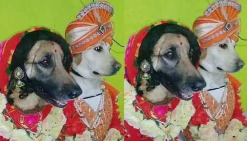 Video: माथे पर बिंदी, कान में झुमका पहन कुत्ते संग रचाई शादी, लोग बोले- बस यही बाकी था