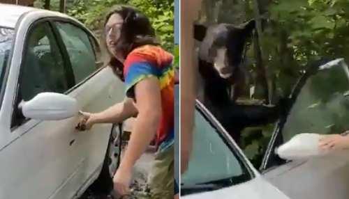 अचानक कार में फंस गया भालू तो शख्स ने लगाया जुगाड़, देखें वायरल Video