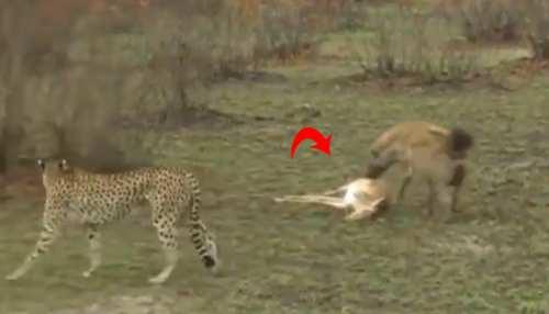 देखें Viral Video: क्या एक्टिंगबाज निकला ये हिरण, होने लगी OSCAR देने की डिमांड
