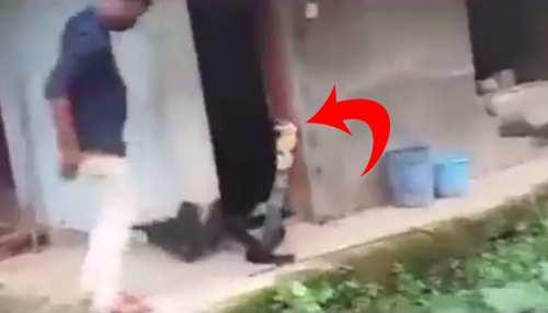 छोटा सांप समझकर सपेरे ने पकड़ी पूंछ, जैसे ही बाहर आया KING COBRA तो छूटे पसीने- देखें VIRAL VIDEO