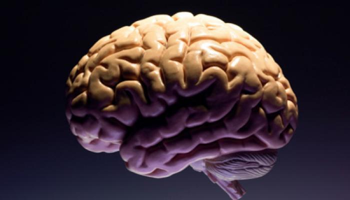दिल के व्यायाम से होती है दिमाग की सुरक्षा