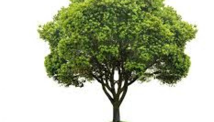 ग्रीन बेल्ट से पेड़ काटने के मामले में केस दर्ज