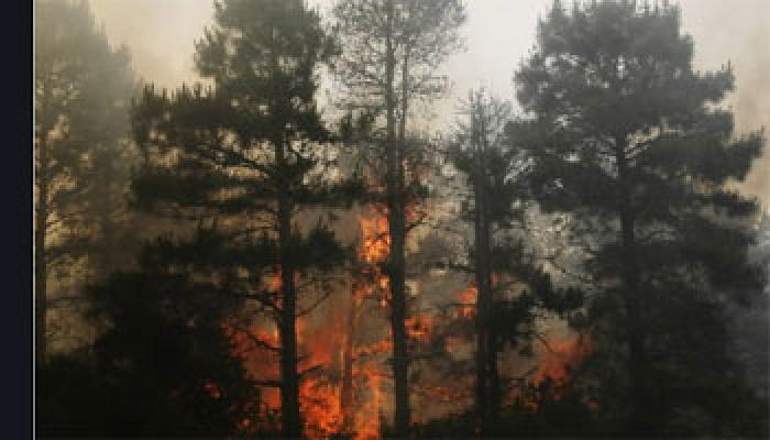 पहाड़ों पर भी गर्मी से राहत नहीं, जंगलों में लगी आग ने बढ़ाई तपिश