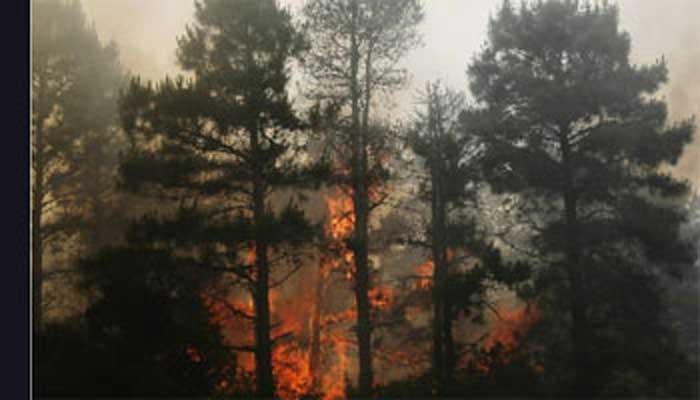 जंगल में आगः 661 घटनाओं में 21 हजार हेक्टेयर जंगल खाक
