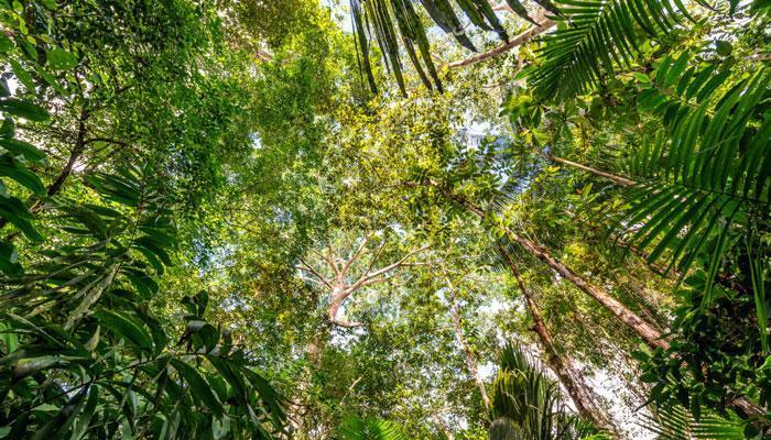 ताज इको सेंसिटिव जोन में वन के रखवालों ने ही काटे 8 हजार पेड़