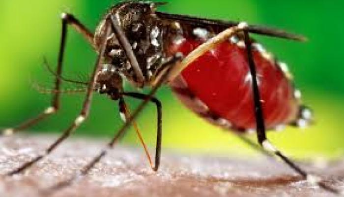 कानपुर की रहस्यमयी बीमारी 'डेंगू' निकली, 6 की मौत, 500 बीमार