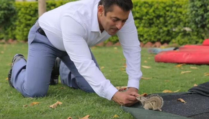 'प्रेम रतन धन पायो' के सेट पर देखिए सलमान की मस्ती और गिलहरी के साथ अठखेलियां