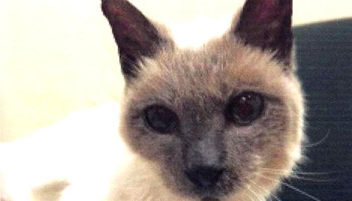 नहीं रही दुनिया की सबसे उम्रदराज बिल्ली, स्कूटर नाम की बिल्ली की मौत