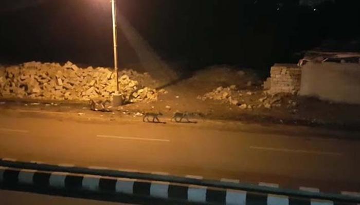 गुजरात: जूनागढ़ की सड़क पर घूमते दिखे 8 शेर, लोगों में दहशत